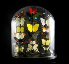 vicorian butterflies - Google Search