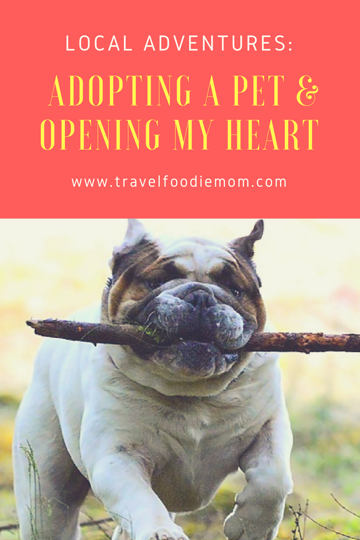 Local Adventures Adopting A Pet & Opening My Heart Arizona