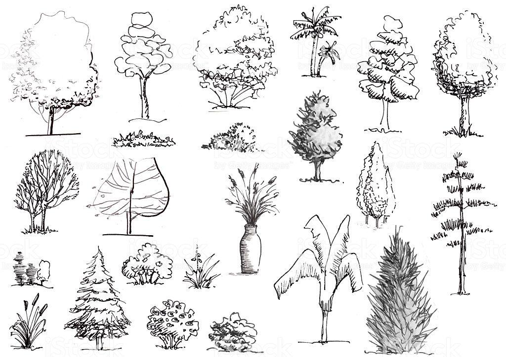 Resultado De Imagen Para Dibujar Arbustos Arbusto Dibujo Dibujo Arquitectonico Del Paisaje Bocetos De Arboles