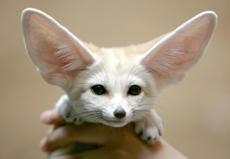 создания экзотические животные для дома фото с названиями очень важно