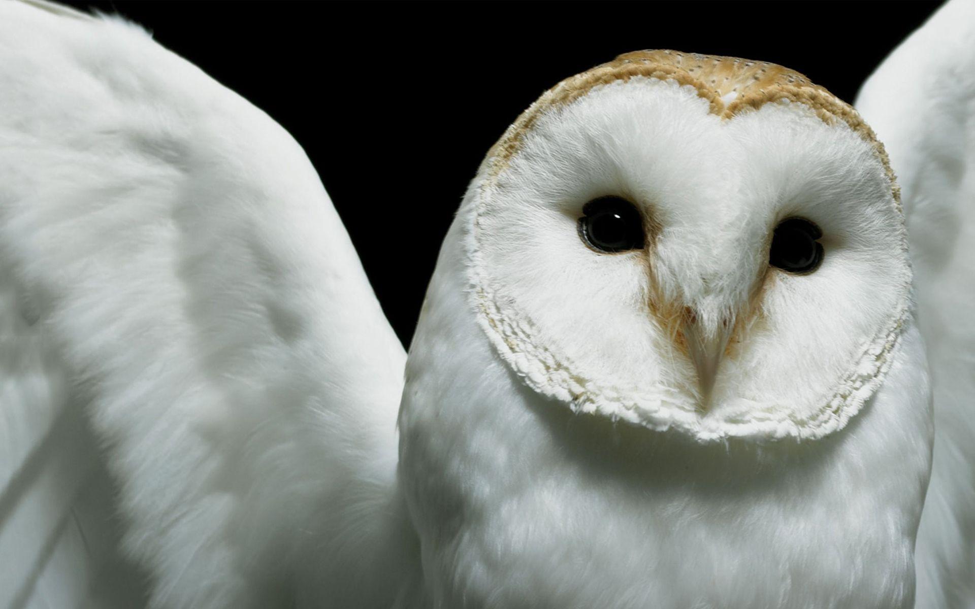 White Owl Wallpaper Cute Baby