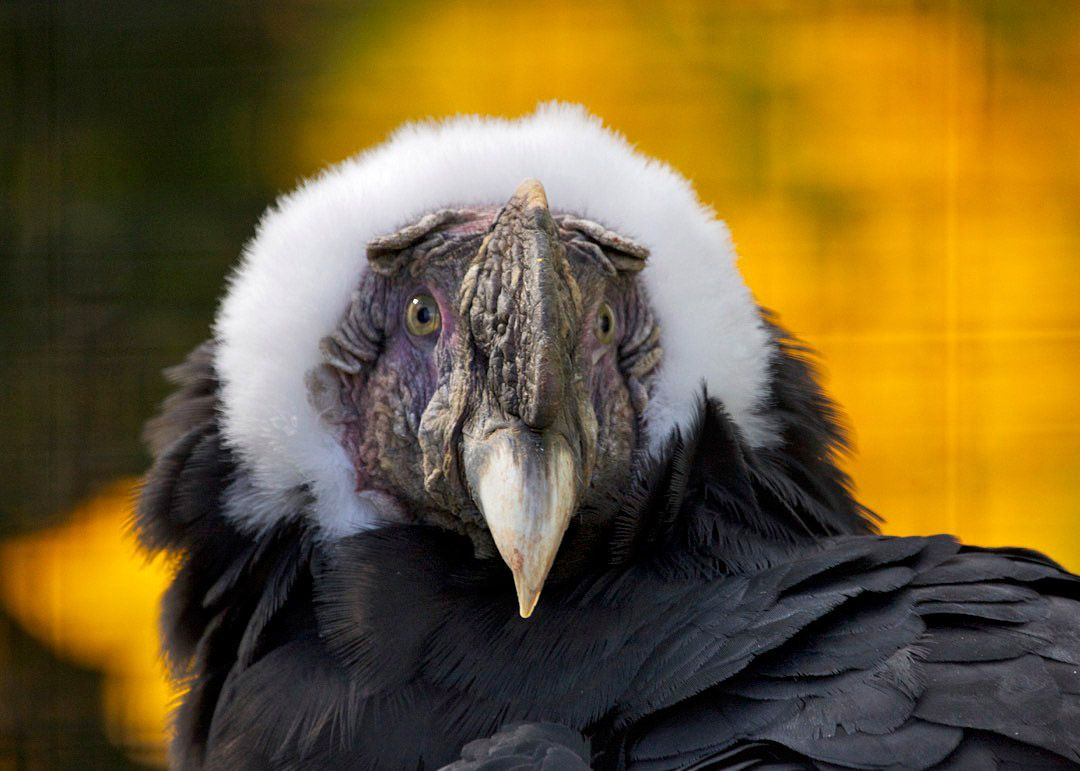 top 10 beautiful largest birds in the world mute swan bird and emu
