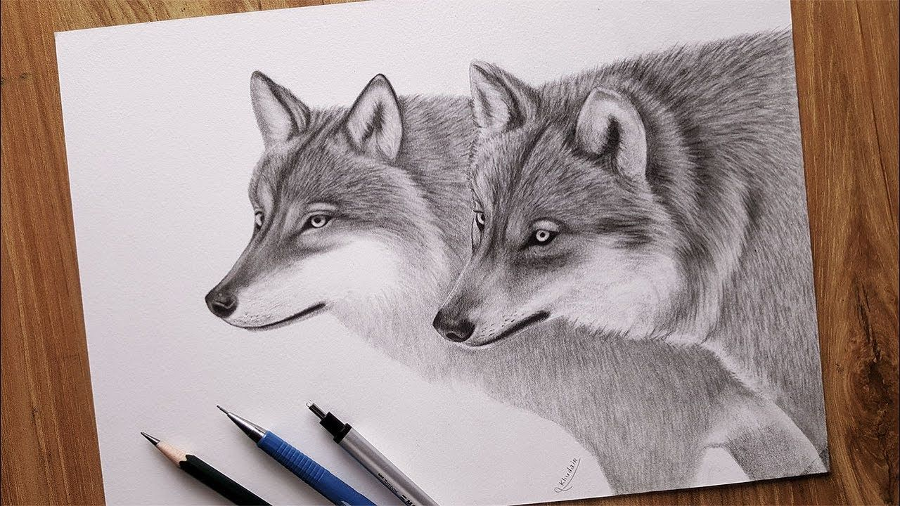 How To Draw Wolves With A Pencil Animal Drawings Wolf Drawing Drawings