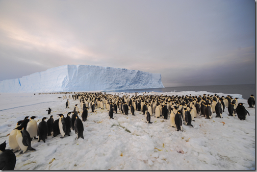 9,000 Colony of Penguins discovered in Antarctica
