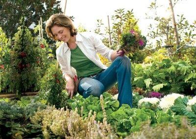 877bca3823d1b36d8c5b8f8cb22b2101 - What Is A Hot Bed Gardening