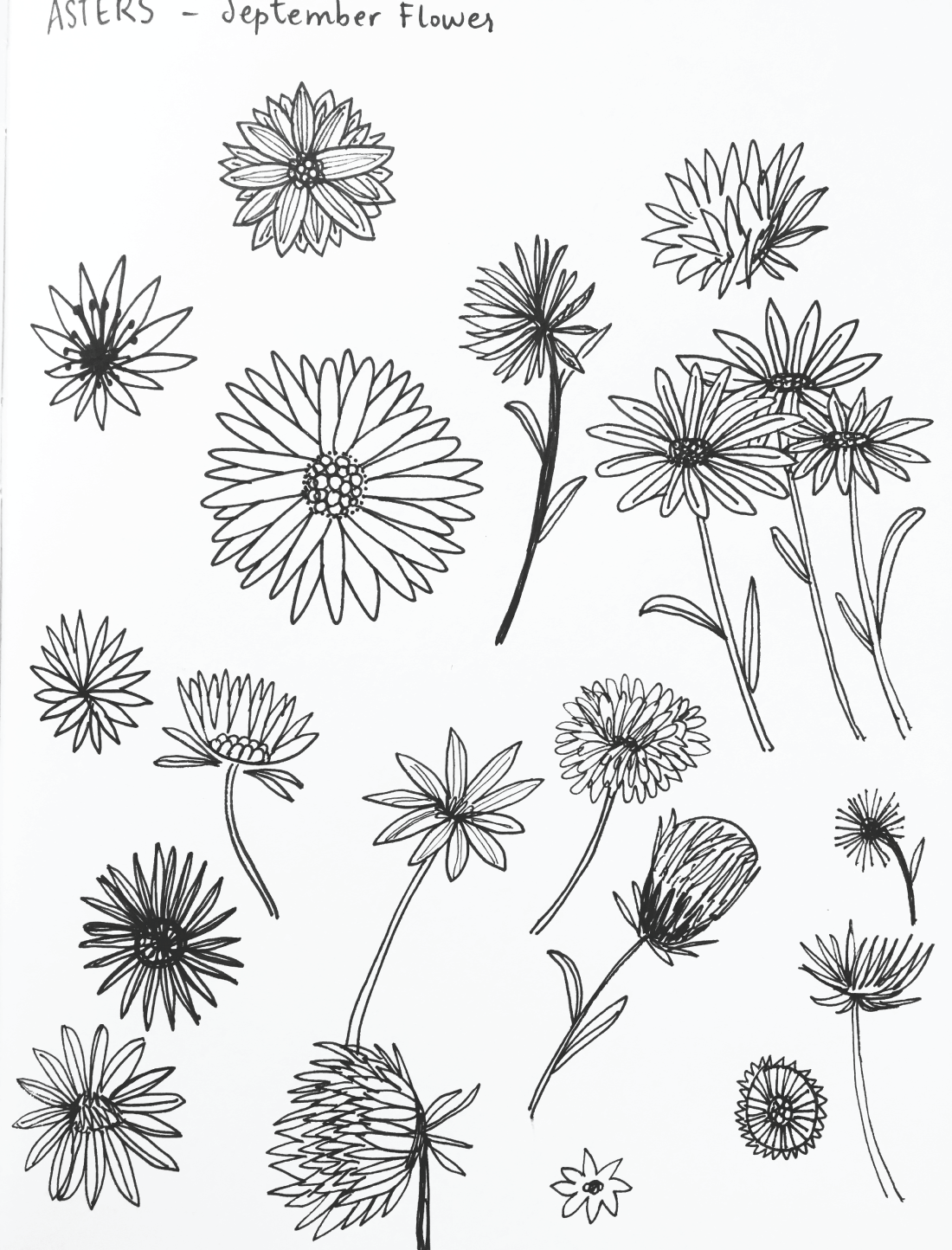 Delightedco Com Retail Brand Name For Sale Birth Flower Tattoos Aster Tattoo Flower Sketches