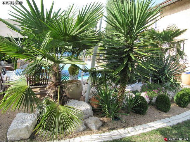 Ete 2009 Amenagement Jardin Avec Palmier Decoration Jardin Exterieur Amenagement Jardin