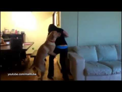 Dog mating girl