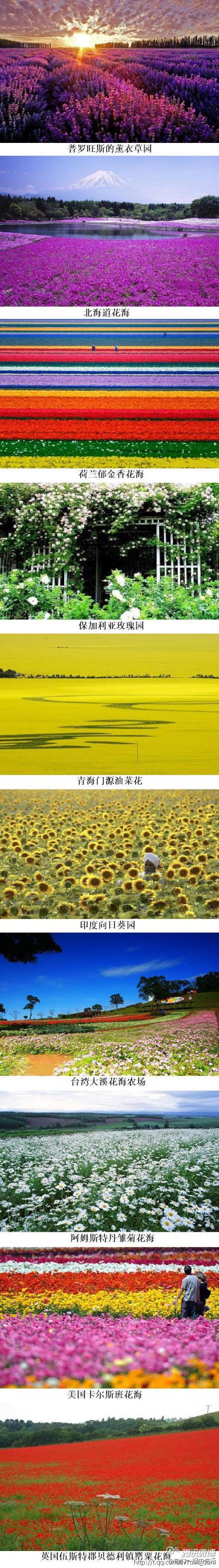The World S Top Ten Beautiful Flowers Garden Travelling