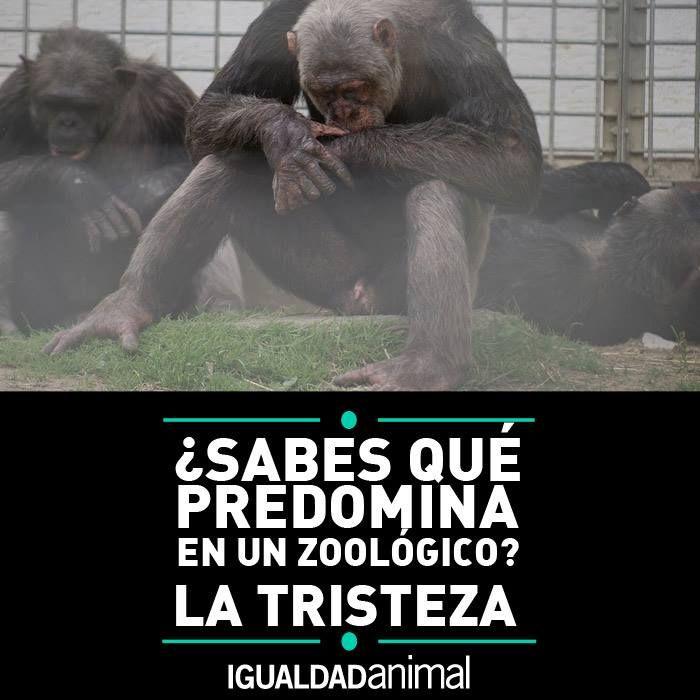 Sabes Qué Predomina En Un Zoológico La Tristeza Comparte