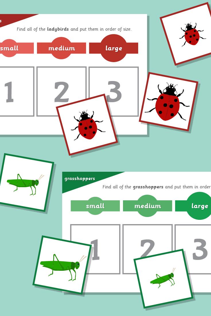 Minibeast Size Sorting | mini beasts topic | Pinterest | Mini beasts ...