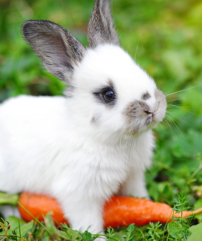 Vishal Rabbit Care Bunny Care Pet Bunny