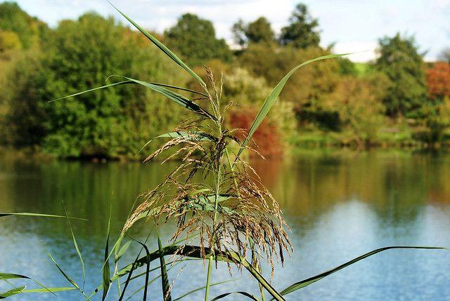 https://flic.kr/p/79r2cC | Autumn at the lake