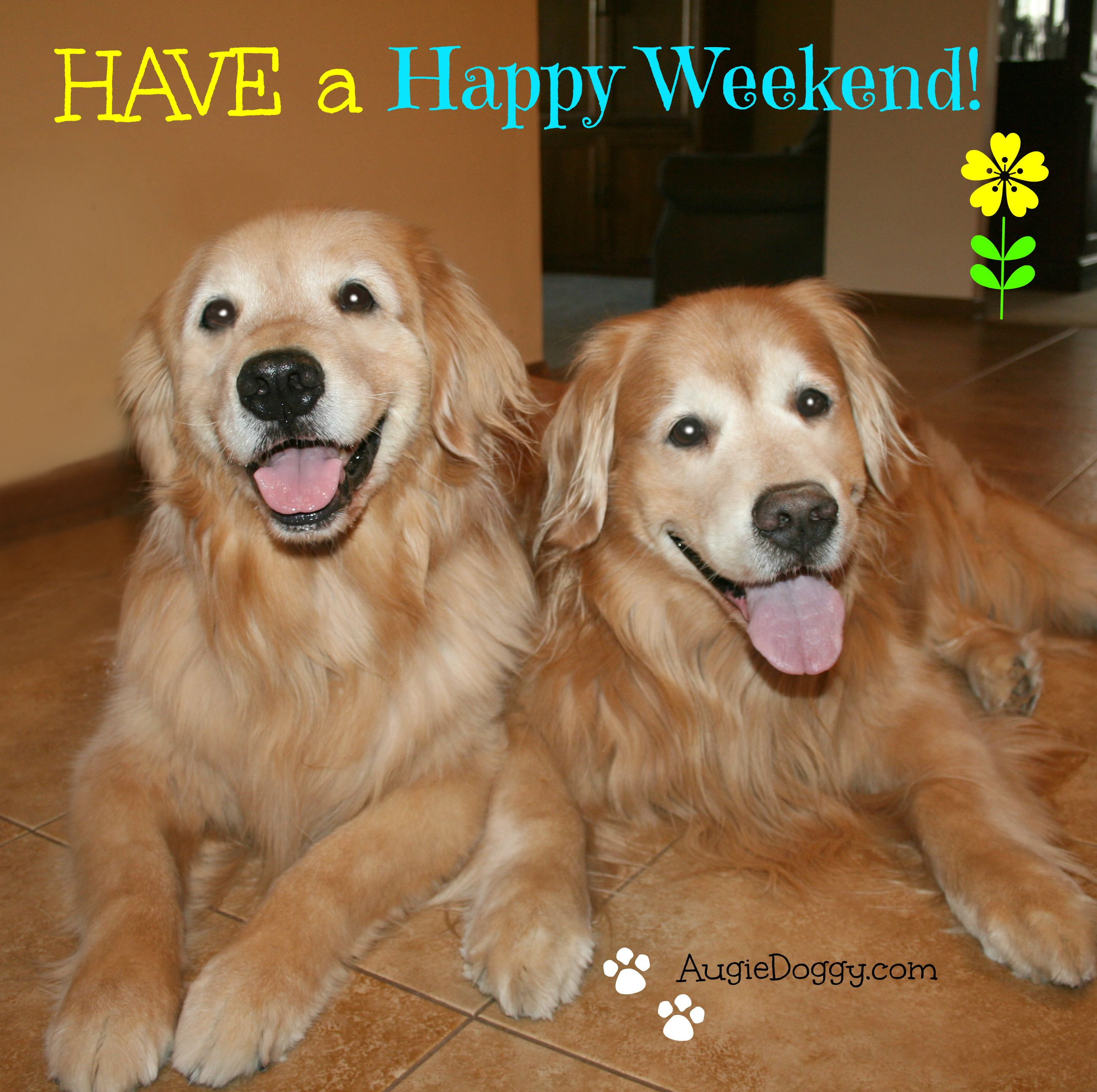 Happy Weekend From Augie And Ti Dogs Golden Retriever Golden Retriever Dogs