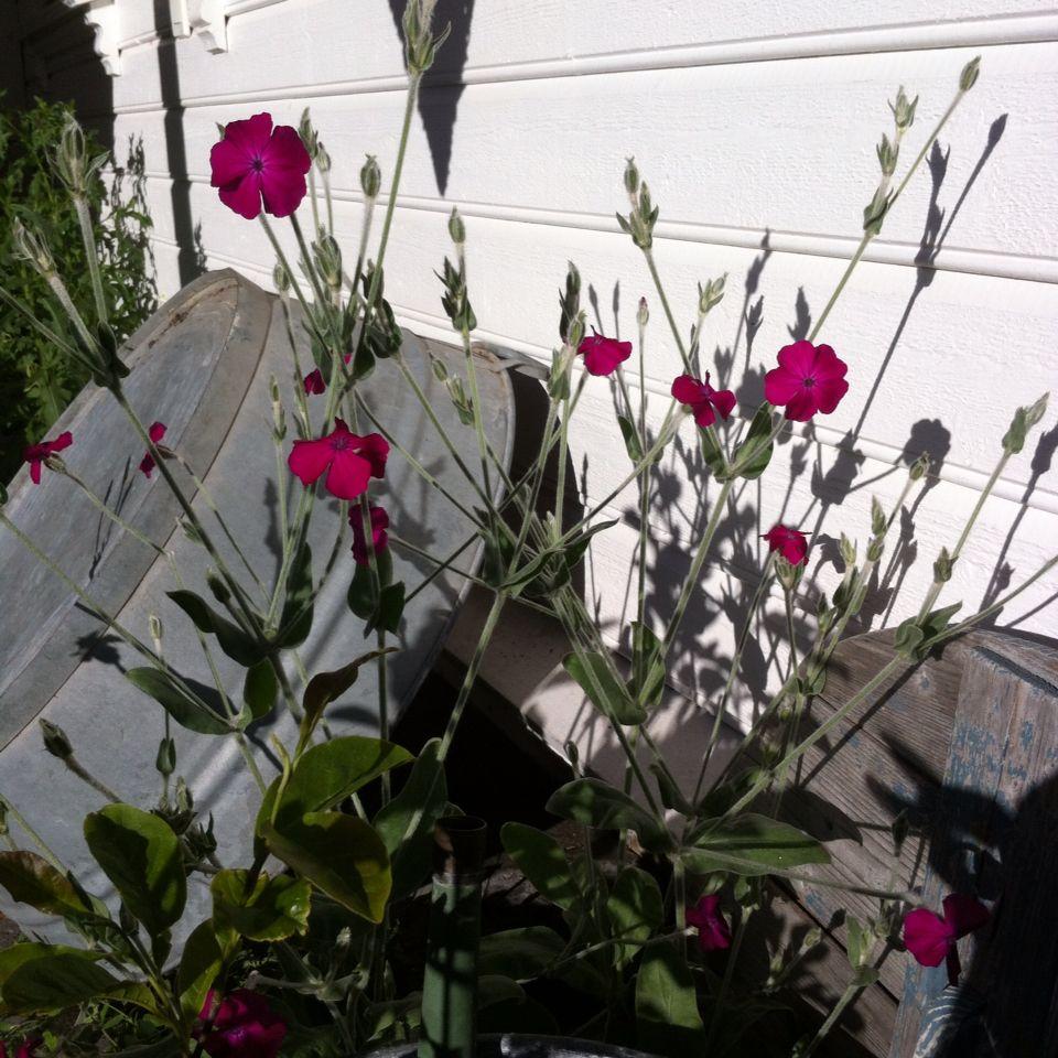 Blomster i Hagen.