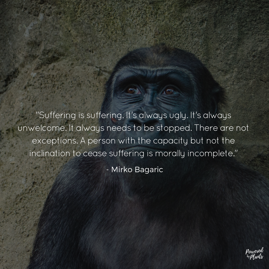 Animal Cruelty Quotes Vegan Govegan Quotes  ⓋEganism  Pinterest  Vegans Animal
