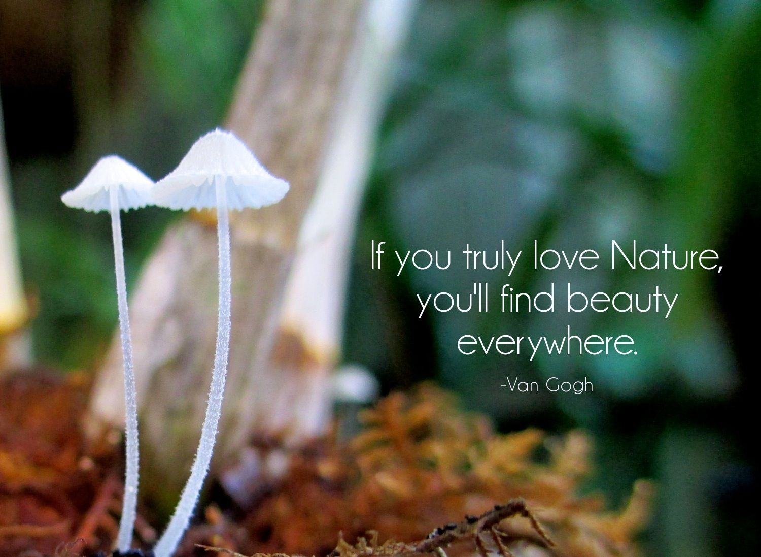 Vincent Van Gogh Nature Quotes Nature Quotes Adventure Nature Quotes Quotes About Photography