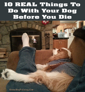 Dog Bucket List: 10 REAL Things To Do With Your Dog Before You Die