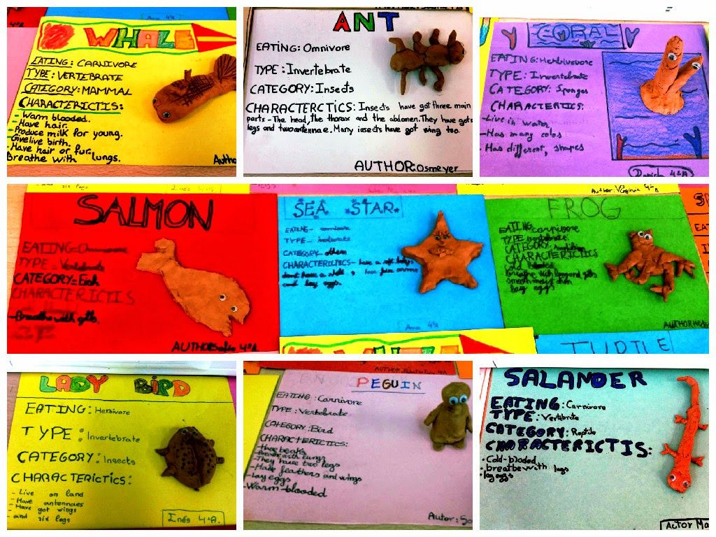 Vertebrates And Invertebrates Museum Project With Images