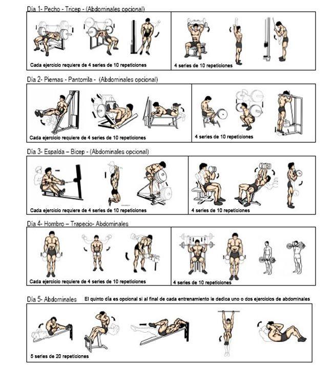 Ejercicios para ganar masa muscular ejercicios - Rutinas gimnasio en casa ...