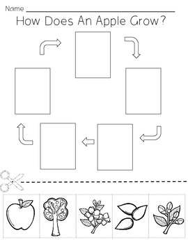 picture about Apple Life Cycle Printable named Apple Lifecycle Clroom Coaching science, Apple, Education