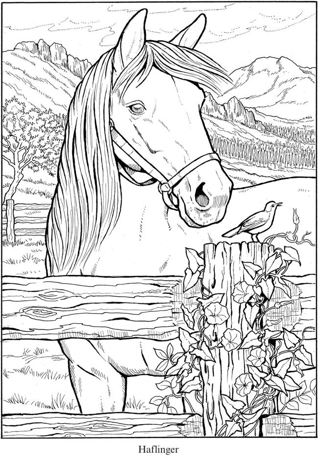 Creative Haven Great Horses Coloring Book -- 6 sample pages ...