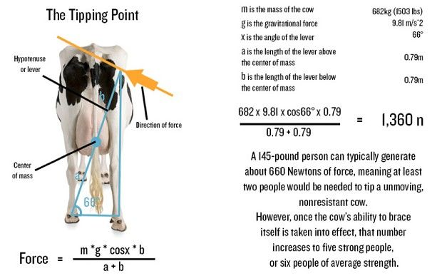 Did you know cow tipping is physically impossible? Don't