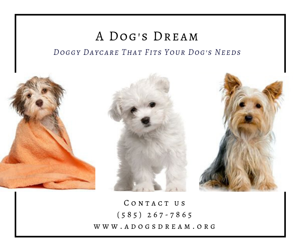Dog Daycare Rochester NY Dog daycare, Dogs, Dog grooming