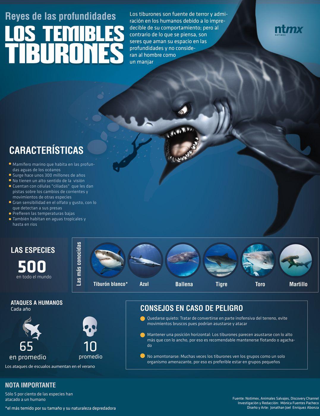 Infografía] ¿Sabes cuántos ataques de tiburones a humanos se ...