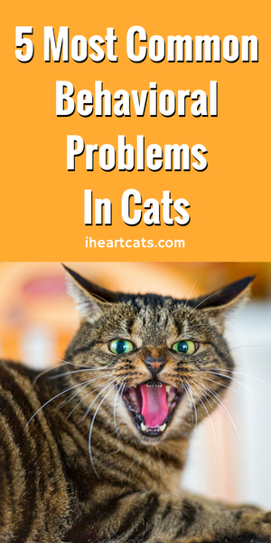 5 Most Common Behavioral Problems In Cats Bad cats, Cat