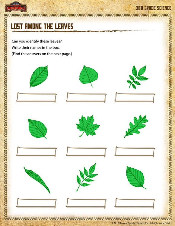 Worksheets Science Worksheets For 3rd Grade common worksheets free printable science for 3rd grade 10 images about leaf science
