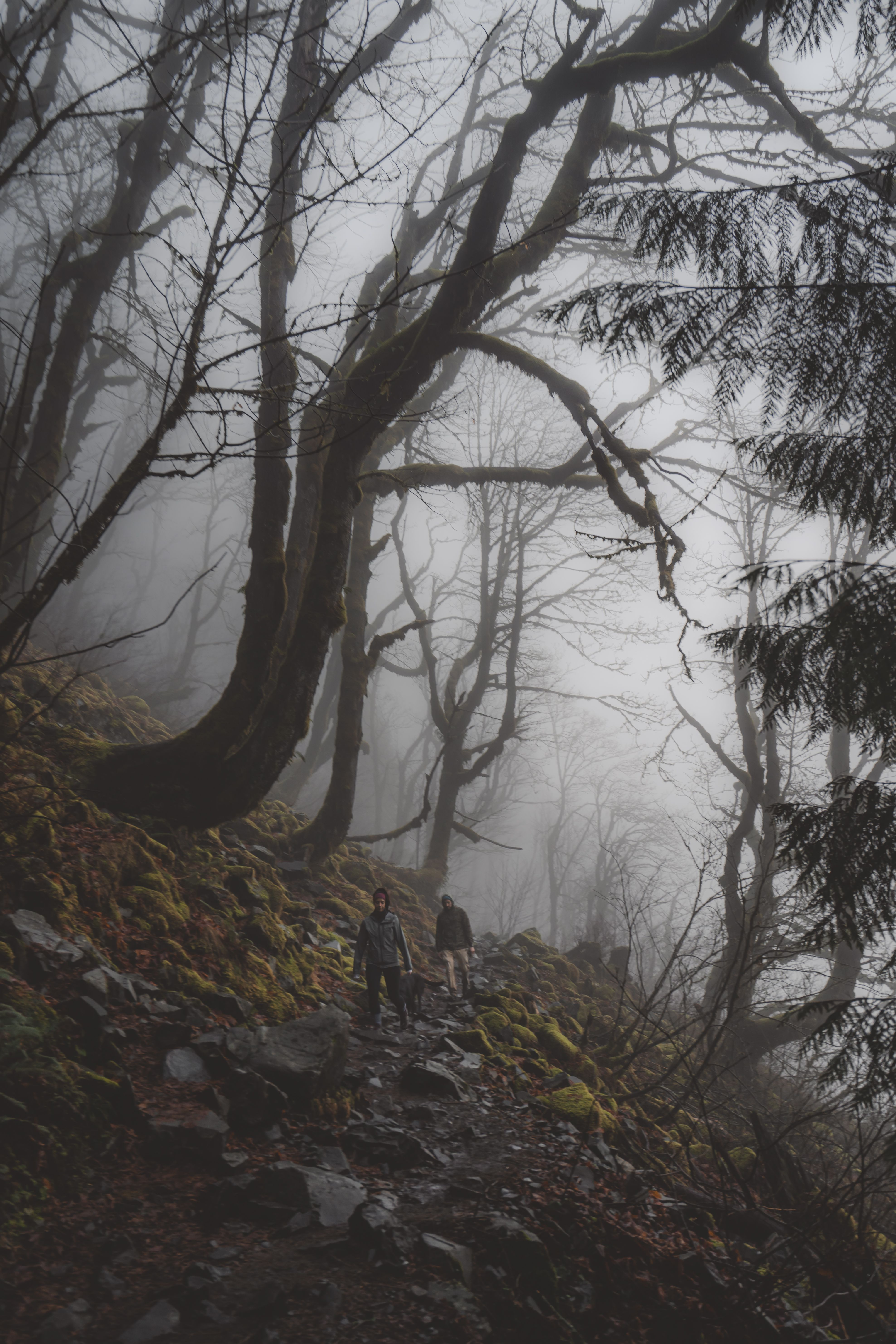 Spooky Forest Stroll In 2020 Instagram Photos Creative Cinematic Photography Nature Photos