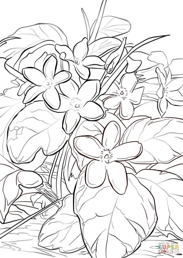 27 Creative Picture Of Mayflower Coloring Page Flower Coloring