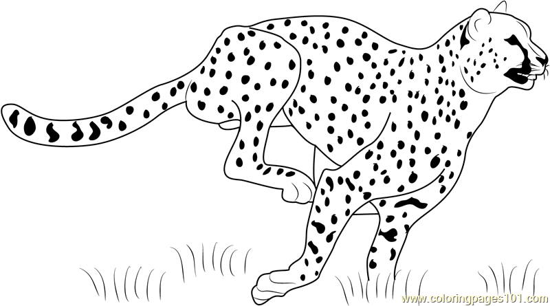 Cheetah Running Coloring Page Free Cheetah Coloring Pages Coloringpages101 Com Coloring Pages Easy Coloring Pages Disney Coloring Pages