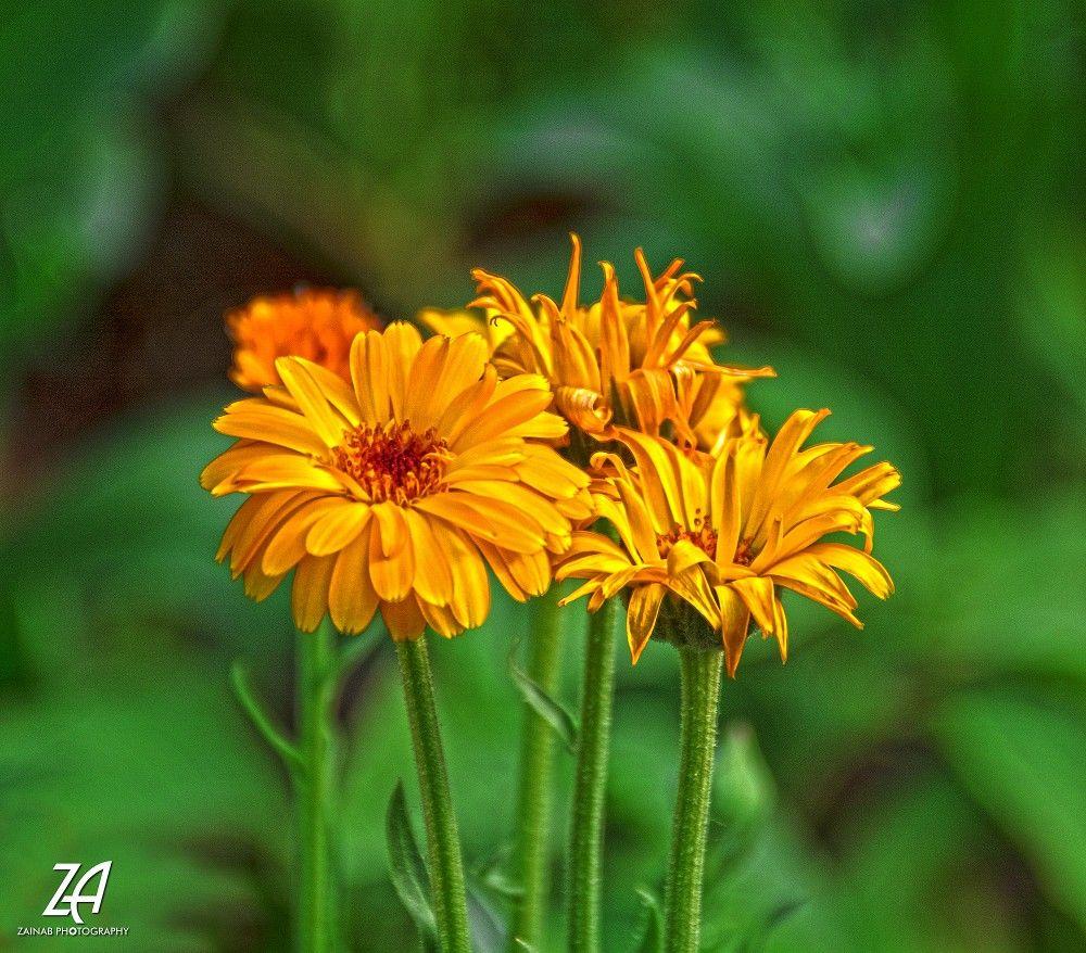 اللهم اجبر بخاطري بما أنت به أعلم C Zainab Photography ورود تصوير تصويري عدستي خواطر كلمات يارب الله أمل صورة ورد مصو Flowers Plants Dandelion