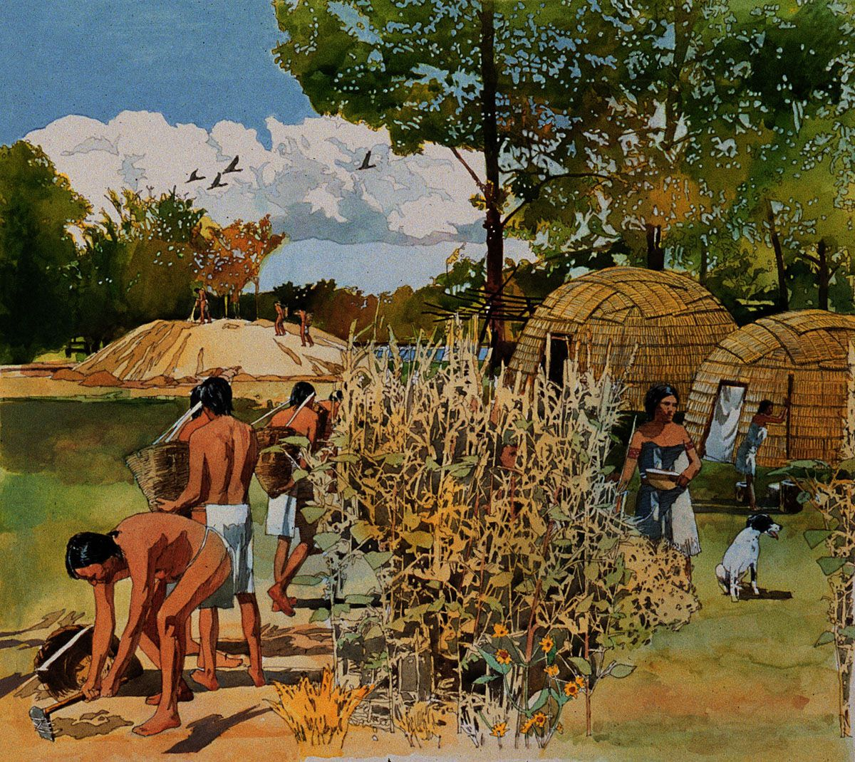 Prehistoric Farmers In Illinois By Andy Buttram
