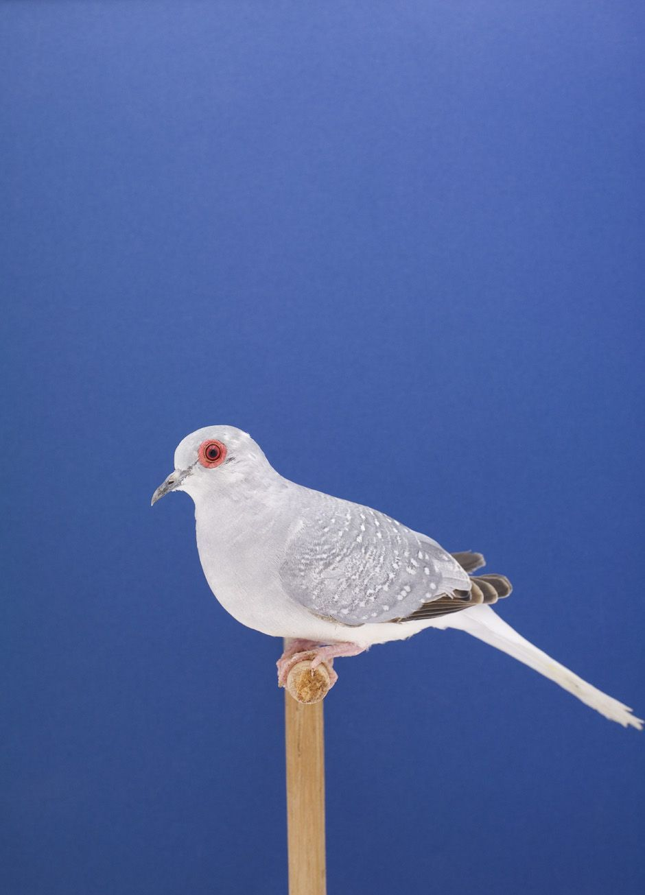 Luke Stephenson An Incomplete Dictionary Of Show Birds Fugle Billeder Portraetter