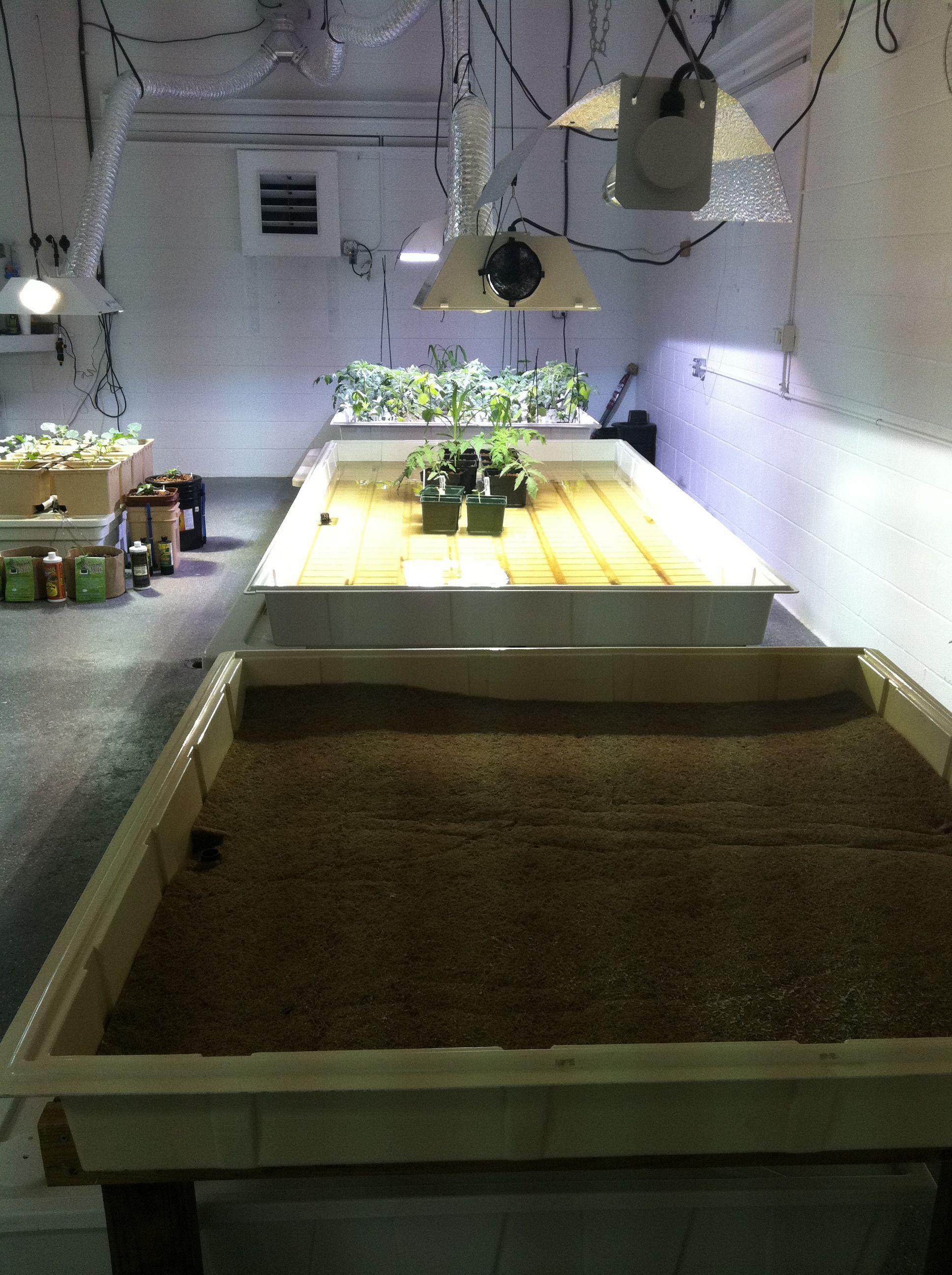 Our Grow Room Grow Room Aquaponic Gardening Indoor Plants
