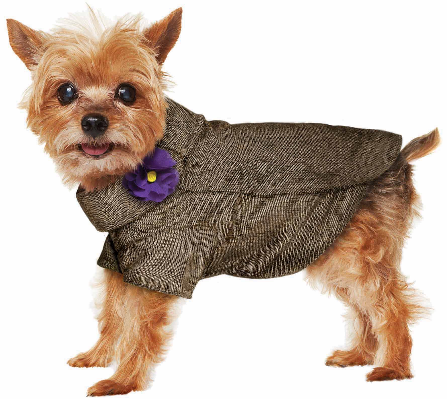 prep your pet in the latest fall fashion from martha stewart pets