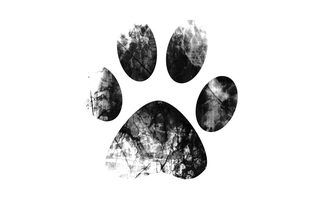 How to Create Ink Prints of My Dog's Paw | dogs | Dog paws