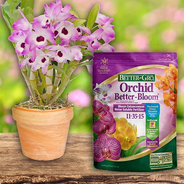 Orchid Better Bloom Plant Food With Images Plant Food