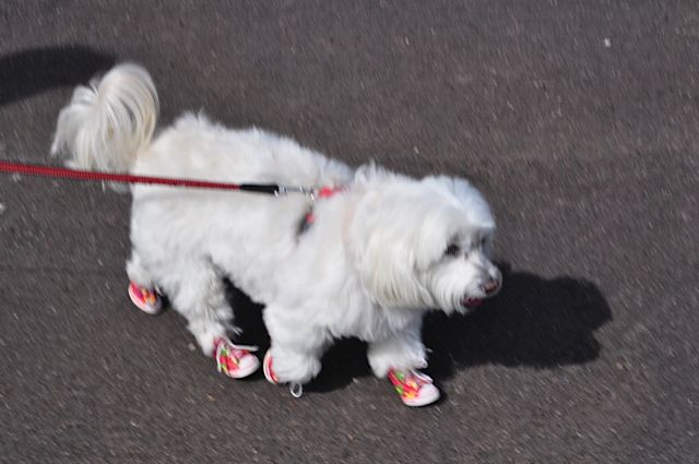 red funky star dog sneakers
