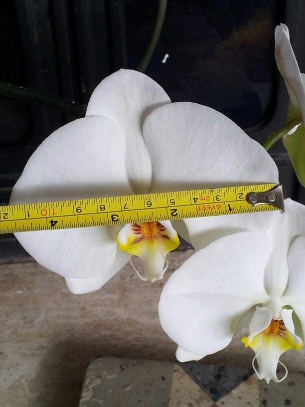 Super bloem