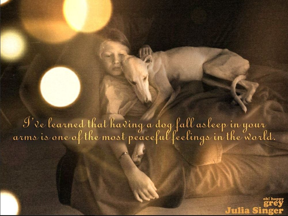 I've learned that having a dog fall asleep in your arms is one of the most peaceful feelings in the world.         ~Julia Singer