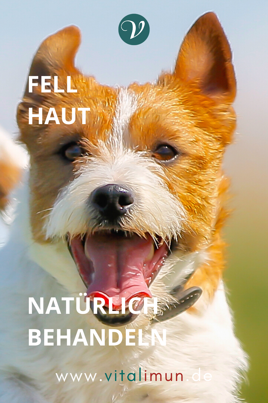 Pin Auf Hund Tierheilkunde
