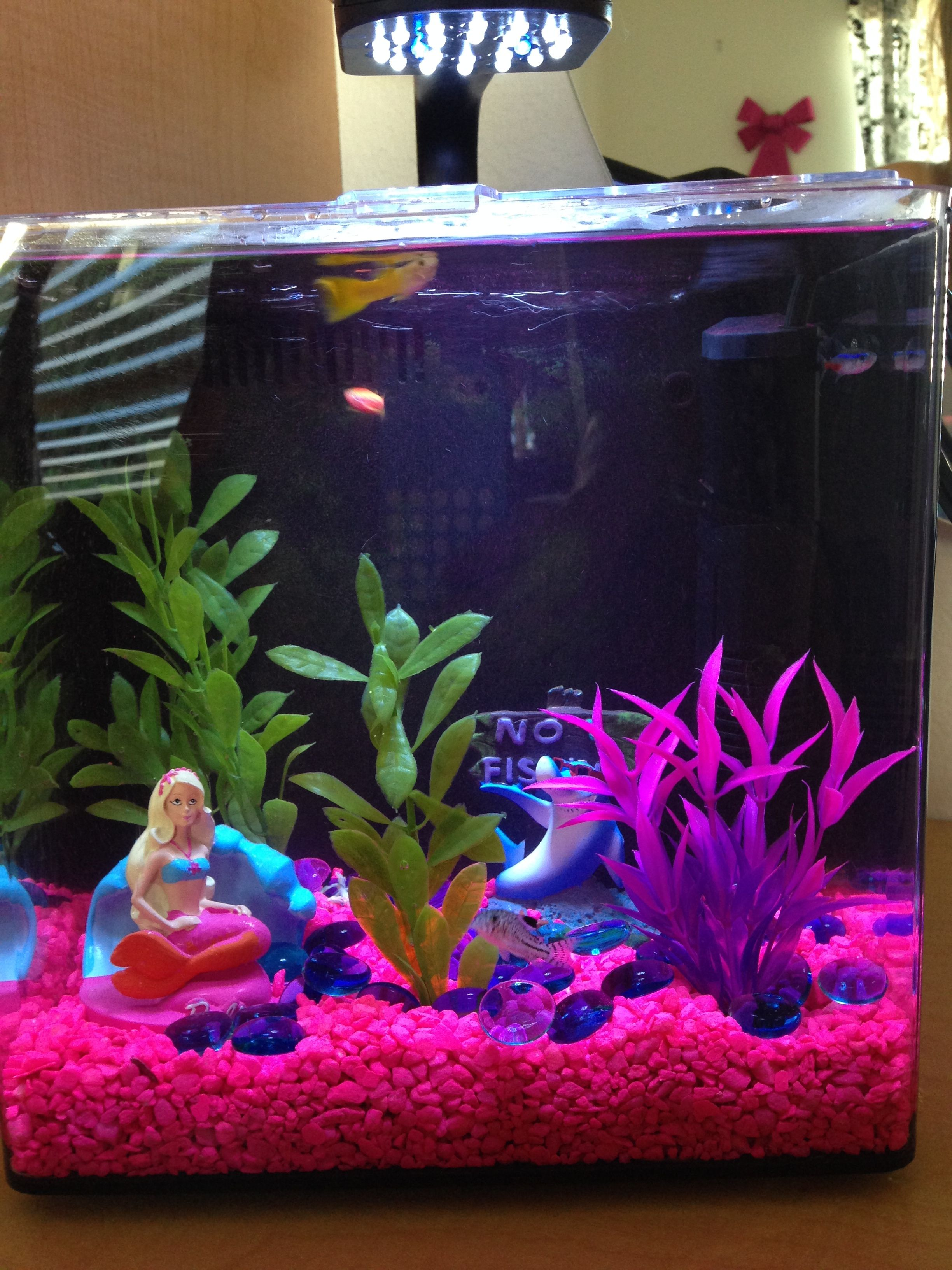 Pink fish tank aquarium with filter -