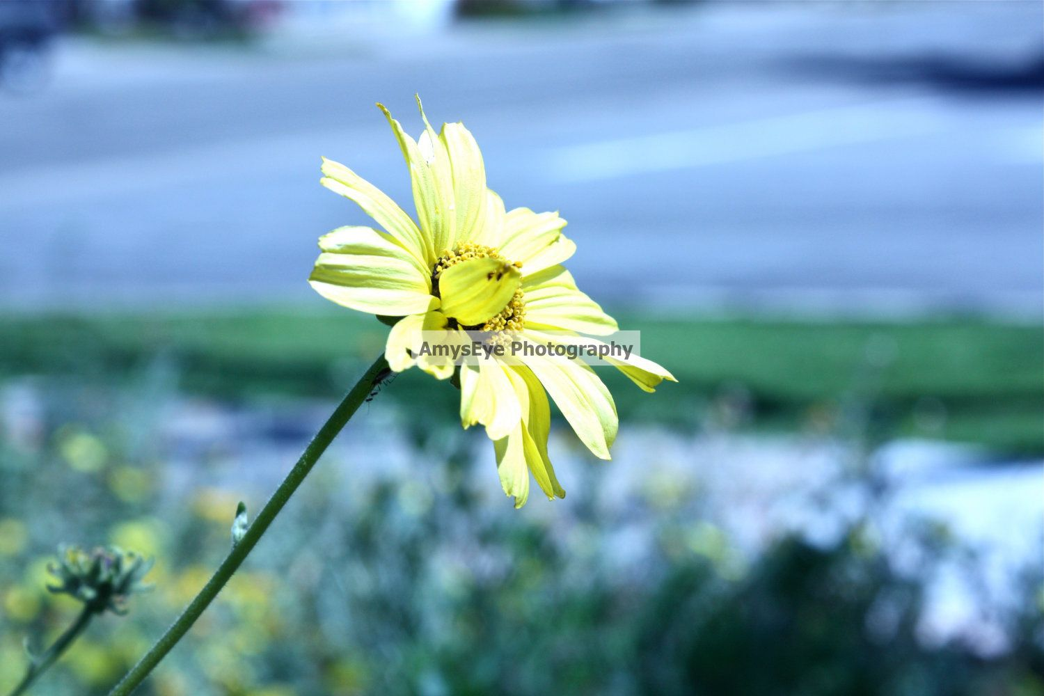 Flower photograph by amyseye on etsy products i love