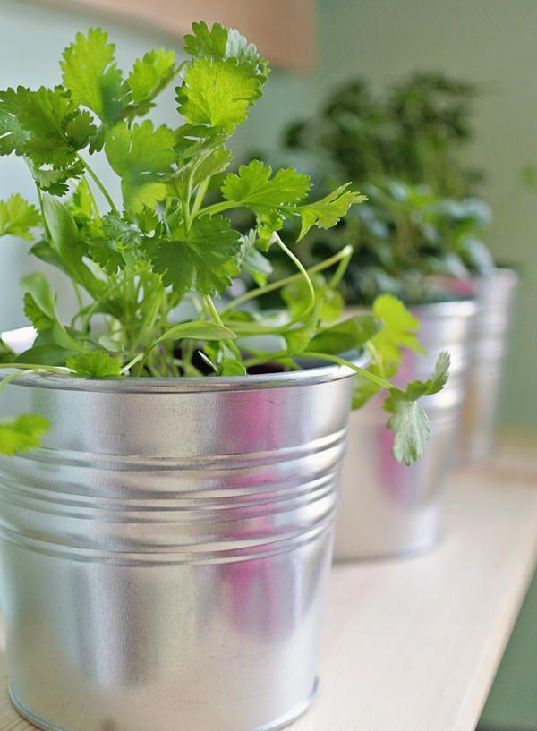 Огород дома: практично, экологично, эстетично – Журнал – His.ua