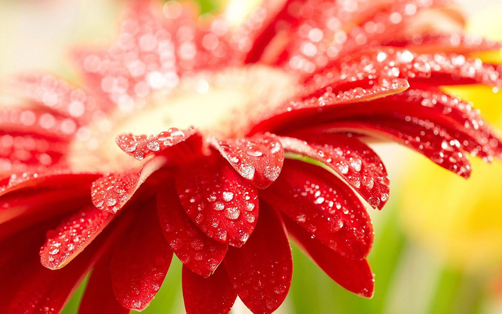 Wallpapers Red Flower Wallpaper Amazing Flowers Spring Wallpaper