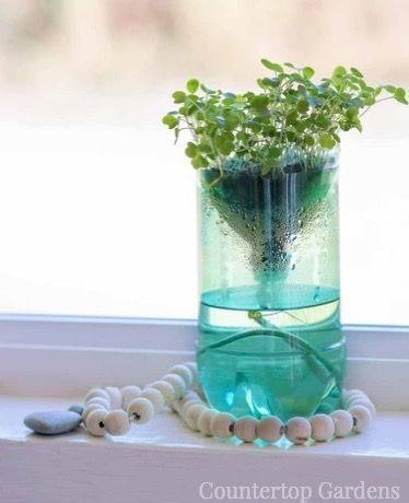 Countertop Gardens Easy Diy Ideas And Everything You Need 640 x 480